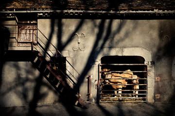 Ferme traditionnelle élevage