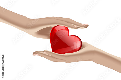 Heart in the human hands