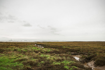 Two Tree Island Marshes