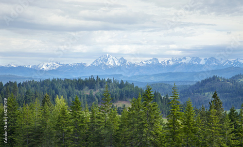 Mountains with snow and pines in Washington state