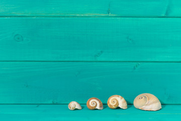 Seashells against a turquoise colored wood background