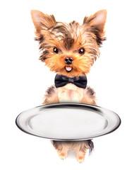 dog holding service tray