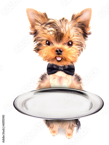 dog holding service tray