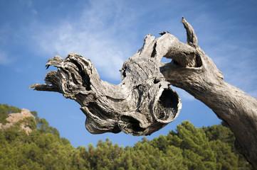 tronco albero forma astratta