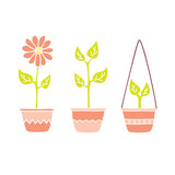Flower and Plants In Pink Pots