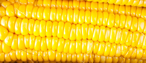Close-up yellow corn