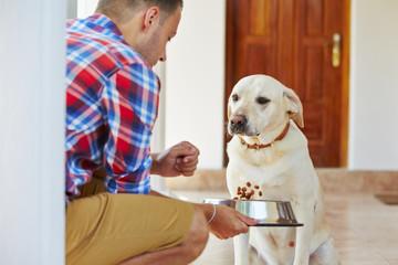 Hungry dog