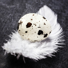 One spotted quail egg with a white  feather on dark textured bac