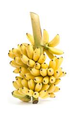 Banana bunch cluster