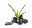 Aloe leaves and zen stones. Isolate on white background