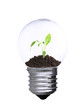 Green eco energy concept. Plant growing inside light bulb,