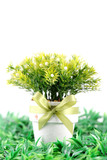 Flower pot with green grass isolated