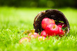 Red apples spilling from a basket onto the grass.