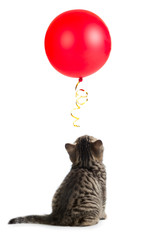 kitten rear or back view looking up on red balloon