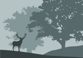 forest in fog - deer