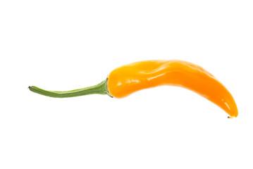 fresh colorful hot chili pepper on white