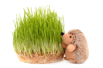 Sprouted wheat and toy hedgehog