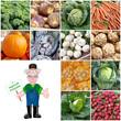 Gemüse aus der Region