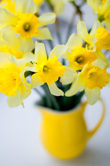 Bouquet of yellow daffodils are in yellow small jug