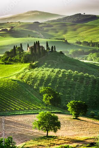 Zdjęcia na płótnie, fototapety na wymiar, obrazy na ścianę : Farm of olive groves and vineyards