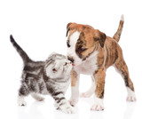 kitten kissing puppy. isolated on white background