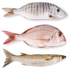 tris di pesci