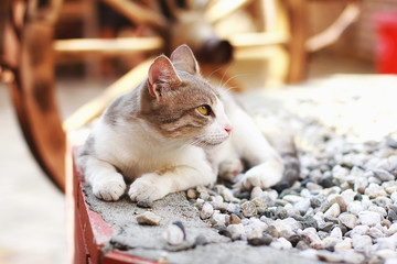 White and grey street cat