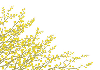 Vector mimosa flowers isolated.