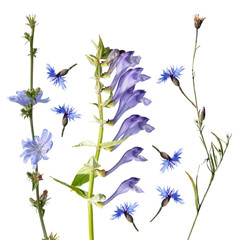 Different blue flowers isolated on white background