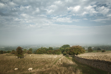 Scenic view of stone wall alongside fields in the Cotswold, Engl