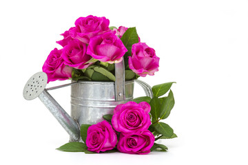 pink roses in a watering can