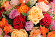 Colorful bouquet de rose
