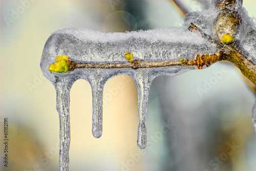 Thick Ice on Tree Branch