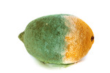 Green moldy lemon citrus fruit isolated. Damaged food.