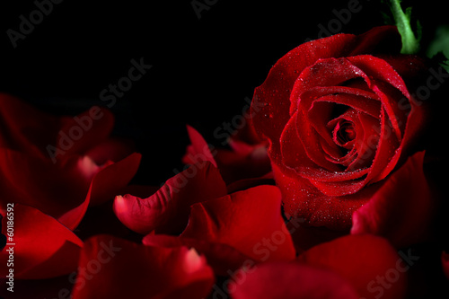 Aluminium Rozen Red rose