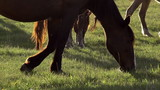 Sunny Pasture. Slow Motion at a rate of 240 fps