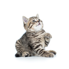playful baby cat isolated on white background