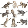 tabby kittens isolated collection