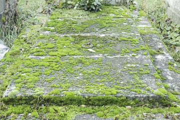 Tomb moldy