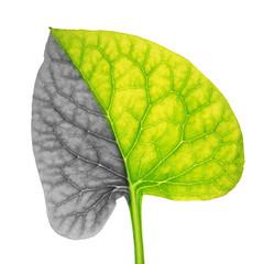 Plant leaf symbolizing lung cancer