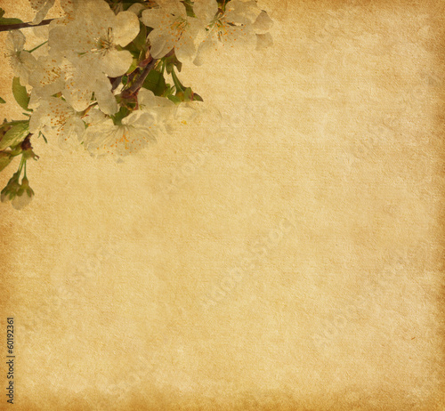 Beige paper background with cherry blossom...