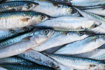 Fresh mackerel fish for sale on market
