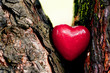 Red heart in a tree trunk. Romantic symbol of love
