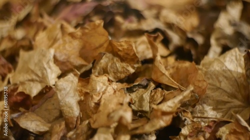 Decorative autumn withered fallen leaves on background
