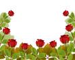frame rose garden leaves on white background