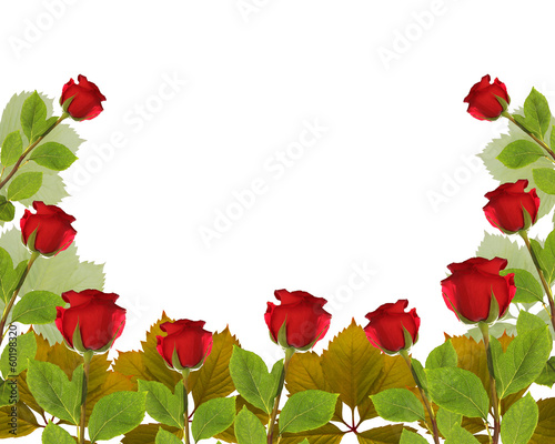 frame rose garden leaves on white background