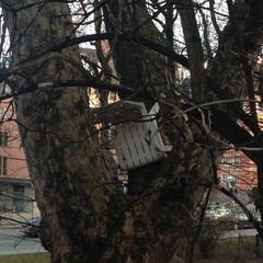 Stuhl im Baum