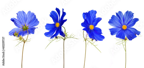 large blue flower from different sides