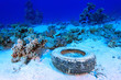 Marine pollution in the tropical reef of the red sea
