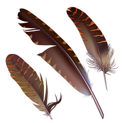 set of isolated feathers on white background